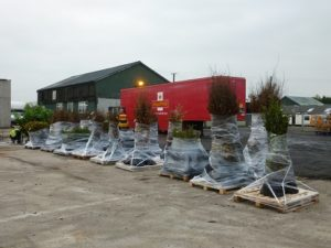 Hedge orders prepared for Despatch