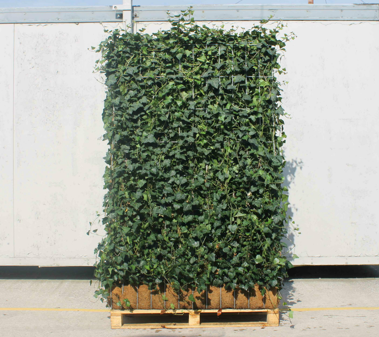 Ivy Screens