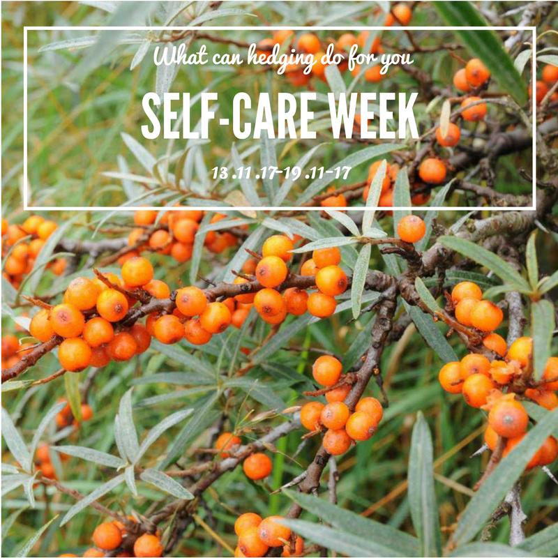 Self-Care Week, Garden Feng Shui & Superstar Sea Buckthorn