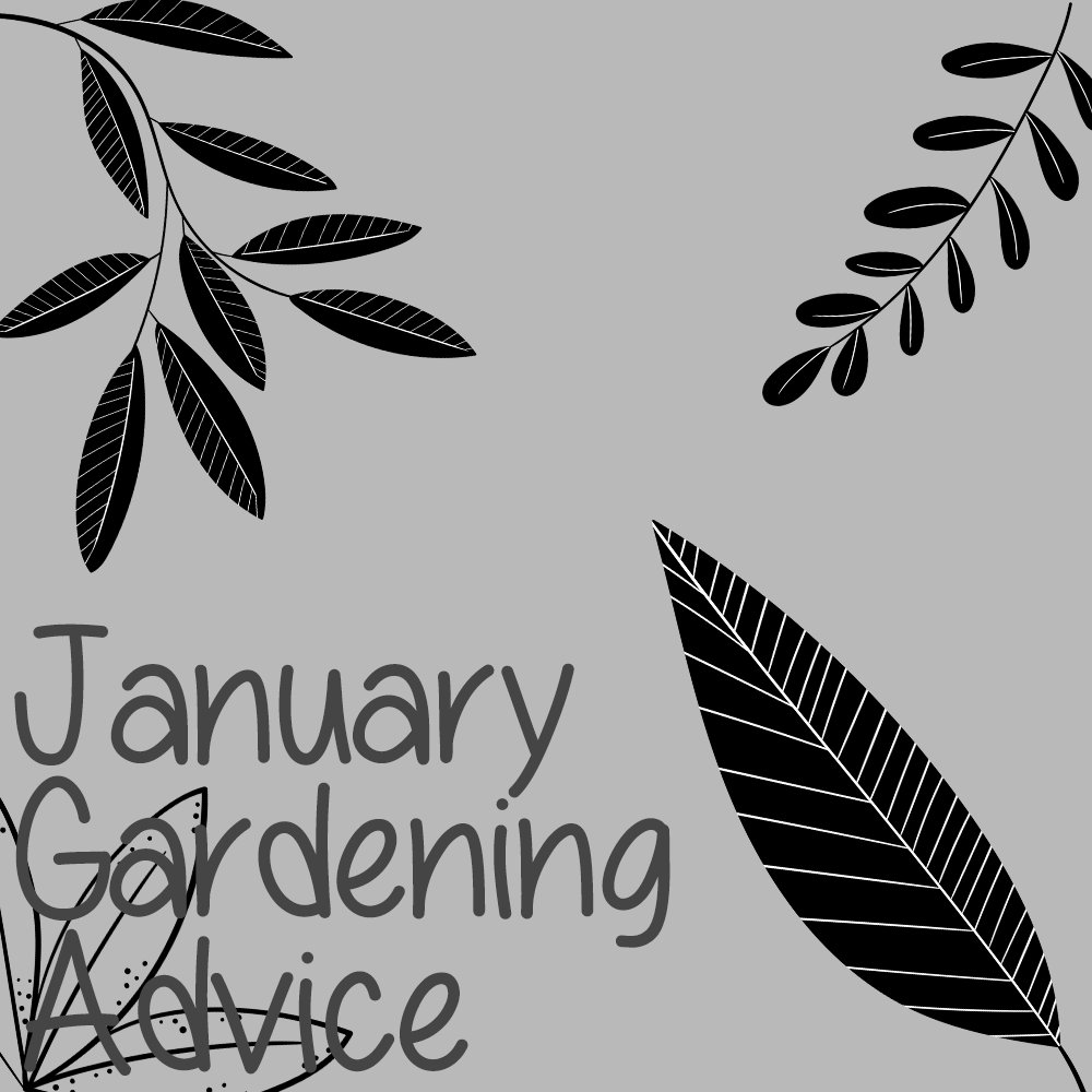 January Garden Advice