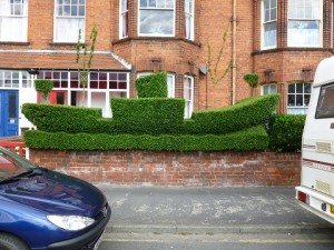 Privet hedge shaped as a boat