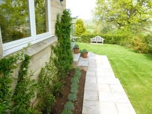 Lavender Hidcote hedge planting