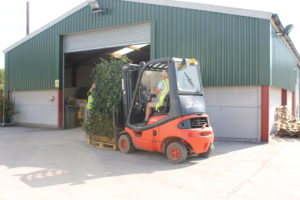Hedges Direct supply Ivy Screens to Love Your Garden (1)